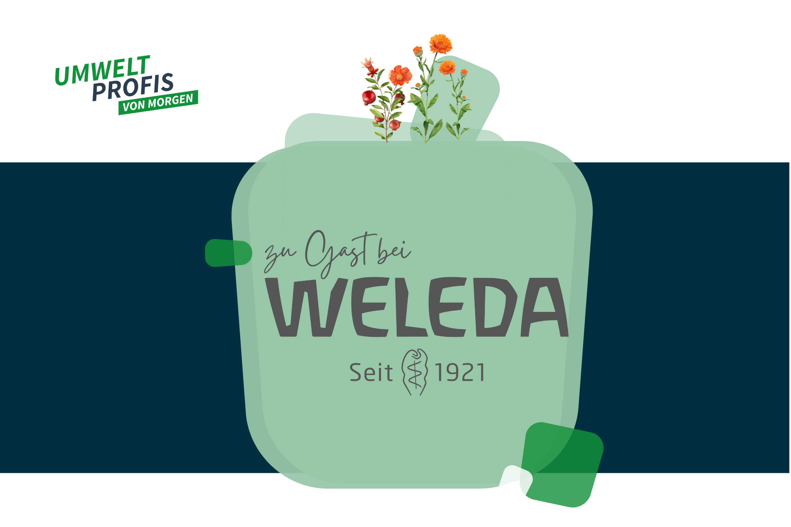 Zu Gast bei Weleda: Ein digitaler Spaziergang durch Europas größten biologisch-dynamischen Heilpflanzengarten